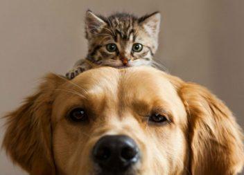 Shampoo antipulci per cani e gatti fatto in casa