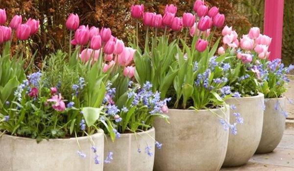 Facciamo decorare la corte col giganti vasi per fiori. 25 idee