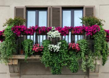 Giardino sul balcone e loggia: 25 idee