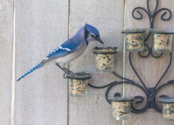 Mangiatoie per uccelli: 20 idee