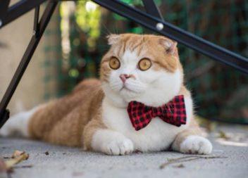 Abbigliamento divertente per i gatti: 28 foto-idee
