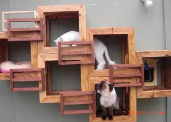 Parco giochi per gatti: 20 idee per piccoli appartamenti