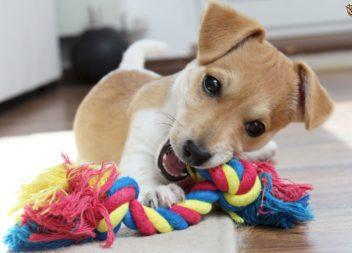 Giocattoli fatti a mano per animali domestici
