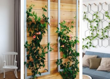 20 idee su piante rampicanti da interno