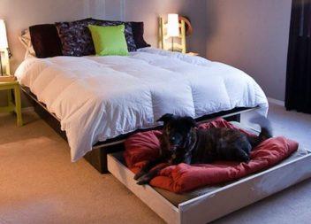16 idee su cucce per cani