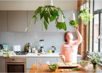 Come crescere le erbe in cucina. 24 idee