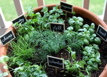 Piante di casa: 20 idee