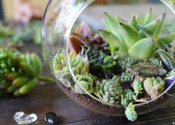 Idee su come piantare piante succulente