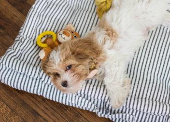 Collare carino per il vostro cane: master-class