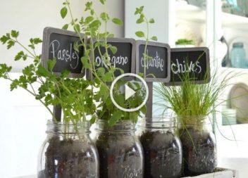 Marcatori per piante:video-lezione