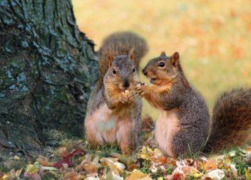 Disegniamo lo scoiattolo! Foto-lezione