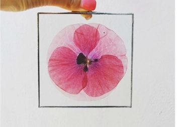 Idee su uso fiori secchi