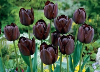 10 fiori insoliti per nel vostro giardino