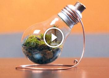 Creazione del terrarium nella lampada. Video tutorial!